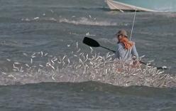 Đàn cá đối khổng lồ nhát nhót trên vùng biển Florida