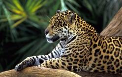 Video: Hé lộ cuộc sống những động vật nguy hiểm nhất vùng Amazon