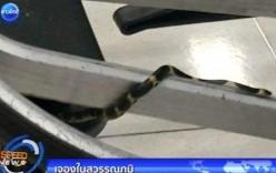 Video: Hoảng hốt phát hiện rắn tại sân bay Thái Lan