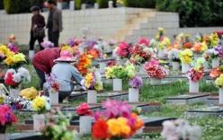 Phong tục ngày Tết: Tảo mộ ngày xuân