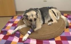 Chú chó sống sót diệu kỳ sau 72 giờ bị chôn vùi