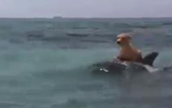 Cá heo cõng chó trên lưng giữa biển khơi