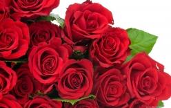 Bật mí ý nghĩa số lượng hoa hồng trong tình yêu và cuộc sống