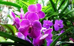 Ý nghĩa thú vị của các loài hoa lan ít người biết đến