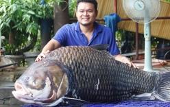 Cá hô khổng lồ nặng 120kg