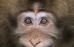 Thú vị với hình ảnh động vật cười tít mắt cực ngộ nghĩnh