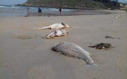 Nguyên nhân cá chết ở miền Trung có thể do độc tố có độc lực mạnh