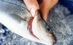 3 cách đơn giản giúp phân biệt cá ươn và cá tươi