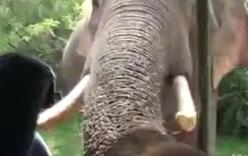 Video voi đói đâm ngà xuyên thủng xe ô tô tìm thức ăn