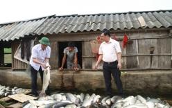 Nước sông đổi màu, cá chết hàng loạt: Phó Chủ tịch tỉnh Thanh Hóa trực tiếp xuống hiện trường