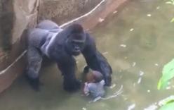 Cha cậu bé rơi vào chuồng khỉ đột từng nhiều lần phạm tội