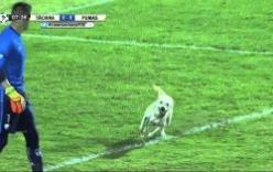 Chó lao vào sân đùa giỡn với cầu thủ giữa trận bóng