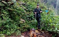 Chó nghiệp vụ tìm kiếm du khách Anh mất tích khi leo núi Fansipan, Sa Pa