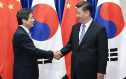 Ông Tập Cận Bình nói Hàn Quốc nên