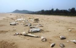 Formosa là thủ phạm khiến cá chết hàng loạt ở miền Trung