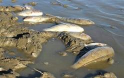Nghệ An: Nắng nóng kéo dài kèm mưa lớn, cá tại các hồ chết hàng loạt