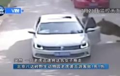 Video: Lao ra khỏi xe cứu bạn, người phụ nữ bị hổ dữ vồ chết