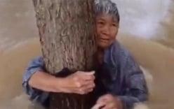 Cụ ông lấy áo buộc vợ vào thân cây, để mình bị nước lũ cuốn trôi