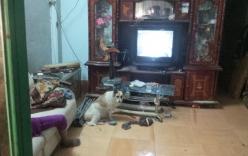 Chú chó trung thành nằm cạnh xác chủ đang phân hủy trong nhà