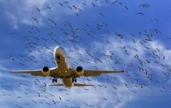 Máy bay Vietnam Airlines phải quay đầu vì gặp sự cố với chim
