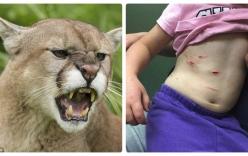 Mẹ rượt theo sư tử giành lại con gái 4 tuổi bị vồ cắp đi