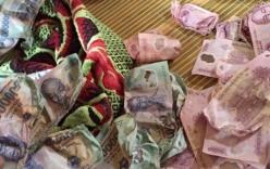 Tranh cãi về 30 triệu tiền polymer bị sấy đến cong queo, co rúm