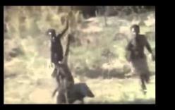 2 sư tử đực tấn công cả đàn trâu rừng