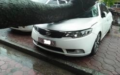 Bão Thần sét đổ bộ đất liền, Hà Nội đã có thiệt hại bước đầu