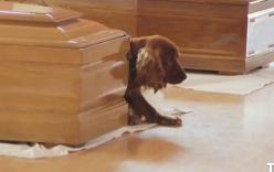 Chú chó nằm lì bên quan tài chủ nhân thiệt mạng vì động đất Italy