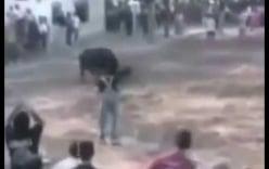 Chú chó lao vào đánh nhau với bò tót cứu chủ