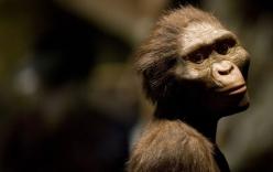 Lucy-Tổ tiên loài người đã chết như thế nào?