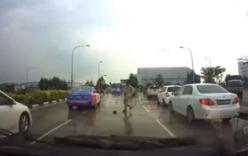 Giao thông tắc nghẽn vì ô tô tránh...con rùa