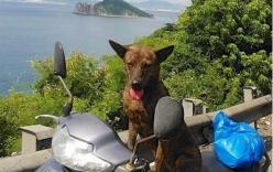 Thầy giáo nghèo lang thang khắp Sài Gòn tìm chó cưng
