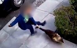 Mèo quay lại tấn công sau khi bị cậu bé hành hạ