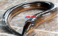 Đi câu cá bắt được lươn