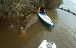 Kỳ lạ xác cá ngừ vây xanh