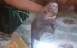 Phát hiện 8 con khỉ nằm dưới gầm xe khách