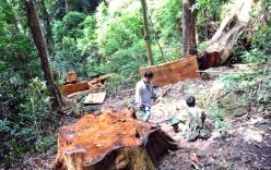 Trạm trưởng bảo vệ rừng bị 8 đối tượng sát hại lúc rạng sáng