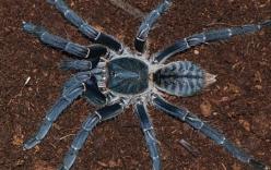 Clip cận cảnh nhện