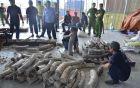 Thêm 1 tấn ngà voi giấu tinh vi trong gỗ bị phát hiện