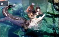 Clip: Cô gái khóc thét khi giáp mặt với cá sấu