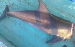 Nhóm người phấn khích khi xả thịt cá heo khiến dân mạng phẫn nộ