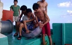 Tìm được nhóm ngư dân cắt đầu, mổ bụng cá heo quý ở Phú Quốc