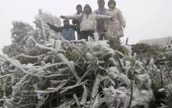 Sa Pa rét 4 độ C, băng giá phủ trắng dãy Hoàng Liên Sơn