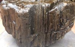 Phát hiện khối gỗ ngọc am hóa thạch, đại gia trả trăm triệu không bán
