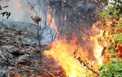 Cháy rừng dữ dội ở Hải Phòng do người dân hóa vàng