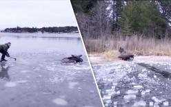 Dùng rìu đập nứt hồ băng, giải cứu nai bị mắc kẹt gây sốt dân mạng