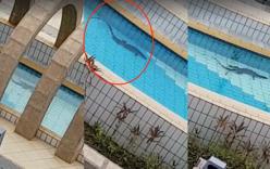 Phát hiện kì đà 1m bơi lội trong công viên nước ở Singapore