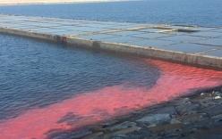 Xuất hiện dải nước màu đỏ ở biển Vũng Áng