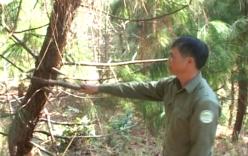 Nhân viên bảo vệ rừng tử vong bất thường khi đang tuần tra